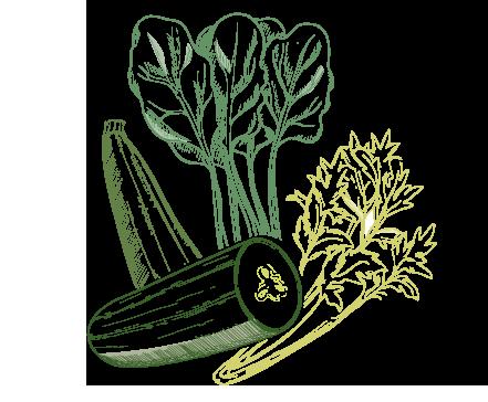 Illustrazione cetriolo e sedano