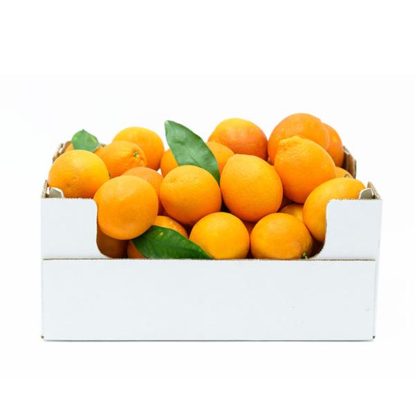 cassetta di 8kg di arance tarocco siciliane