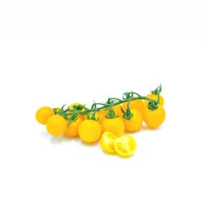 gtrappolo di pomodorino giallo siciliano